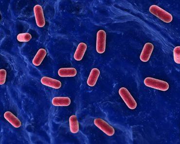 Good bacteria